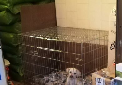 Napoli: cucciolo trovato in una busta di plastica